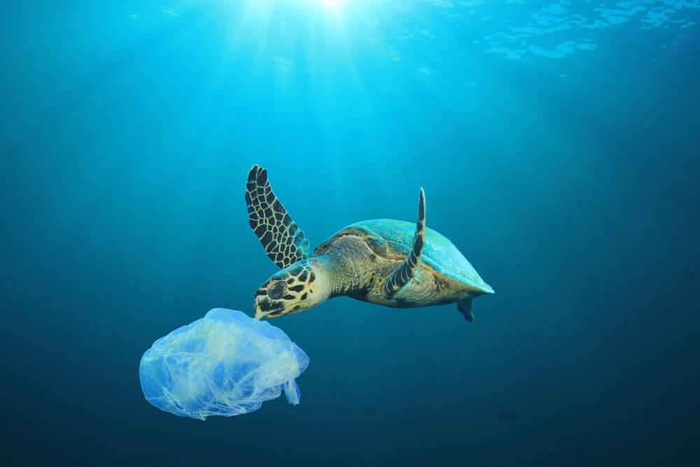 Apuesta por una vida sin plásticos