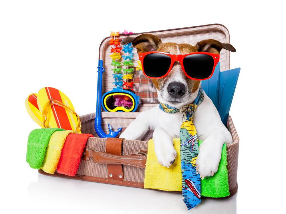 De vacaciones con tu mascota, ¿puede volar contigo?